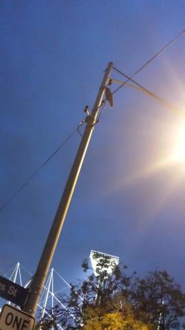 Owl on a line
