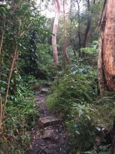 Bush running trails